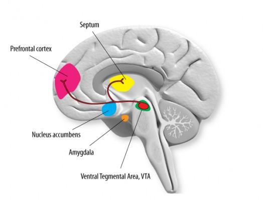 limbiskt system